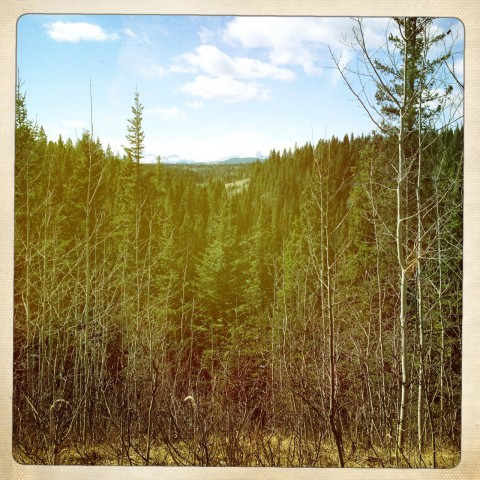 Alberta forest and mountain scape