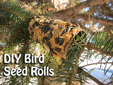 DIY Bird Seed Rolls by Bubblegum Sass