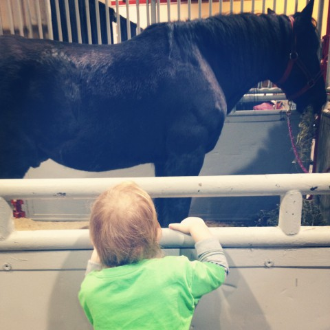 Last weekend we popped down to Aggie Days. Guess who LOVED watching the horses?!