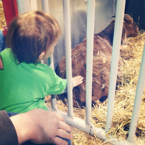 And guess who LOVED petting the goats?! Our own farm days can't come soon enough for this little man.
