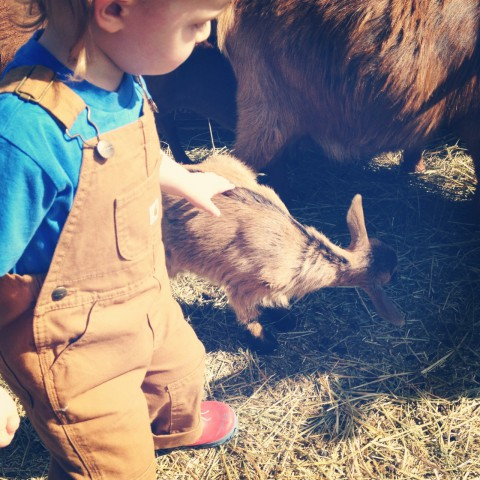 """Spent a morning petting adorable baby goats at Butterfield Acres. Sam & I really wanted to bring them home. (He loves his Carharrt overalls and calls them his """"worker man pants"""". They're perfect for him! Thanks again Lisa)"""