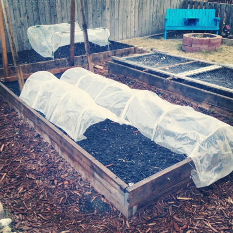 And so it begins, in our own backyard. Hubby has been busy working on various yards for Happiness By The Acre, but this week we took an evening to get a bunch of seeds planted at our place, so hopefully we'll have some fresh veggies too. Cold frames and anti-squirrel nets are up. Now we wait.