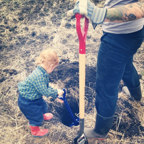 "Sammy helping Auntie Tina dig one of the many holes out on our ""big farm"" for the hazelnut trees that we are planting out there. It's a big task (over 400 hazelnuts to go in, 400 raspberry bushes, and a handful of pear & apple trees). Mark your calendars, the official tree planting day is May 24th! Contact me if you're interested in joining us!"