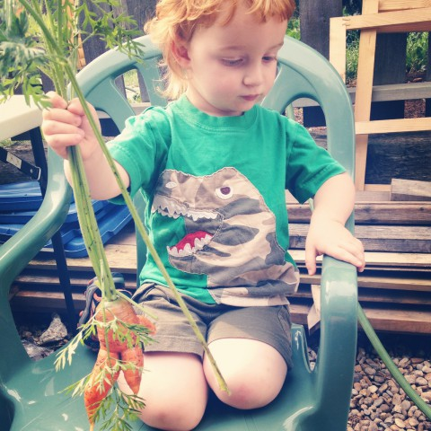 His favourite thing so far to wash are radishes and carrots. Good thing there were too, since there were about 130 carrots to wash this past week for the Happiness By the Acre CSA. He was a super trooper! No complaints, just kept washing and admiring each carrot.